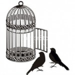 birds outside cage