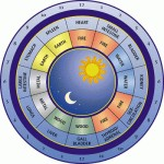 Circadian-Clock from http://www.outsmarthormones.com/2011/03/30/biological-clock-affects-health-weight/