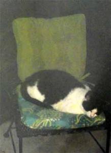 YinYang on new cushion