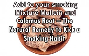 calamus mullein smoking