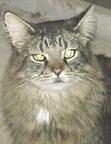 Izzy DaBig Giant Kitty