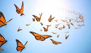 butterflies flying up