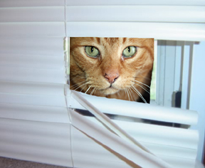 cat miniblinds hole Ben