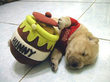 pup sleeping winnie the poo costume
