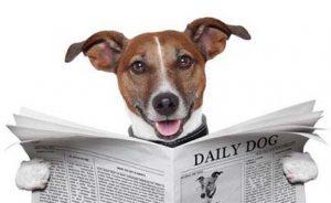 dog-reading-newspaper