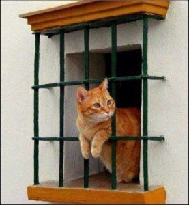 Benny-burglar-bar-window-277x300.jpg